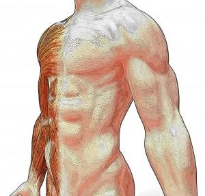 muscoli aloeforever 300x286 Costruisci i tuoi muscoli con la giusta integrazione alimentare